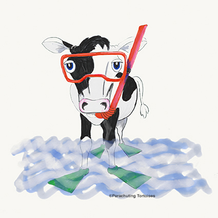 Snorkelling Cow
